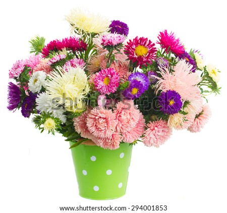 colorful  aster flowers bouquet in green pot isolated on white background - stock photo