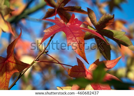 Colorful autumn foliage on twig - blue sky in background - sunny bright autumn look-and-feel - stock photo