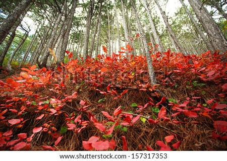 Colorful autumn forest, nature background - stock photo