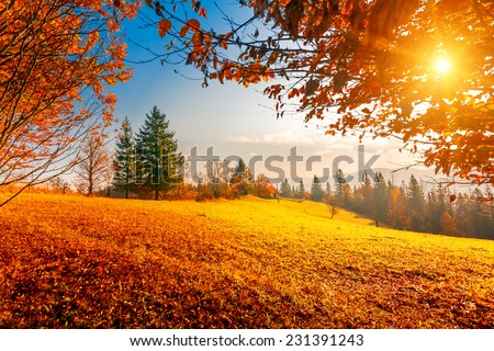 Colorful autumn landscape. Carpathian mountains, Ukraine, Europe. - stock photo