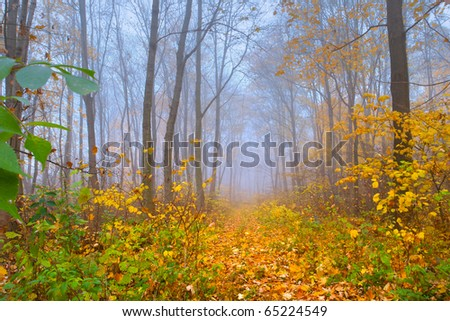 Colorful autumn landscape in the forest - stock photo