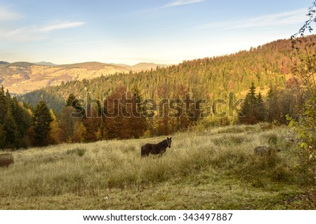 Colorful autumn landscape in the mountains  - stock photo