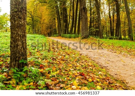 Colorful autumn landscape view of autumn park with dry fallen autumn leaves, soft filter applied - beautiful autumn landscape in cloudy weather with yellowed autumn trees along the autumn alley - stock photo