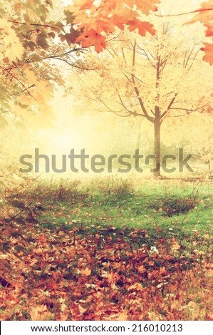 colorful autumn landscape with yellow trees and falling leaves, natural background, instagram effect - stock photo