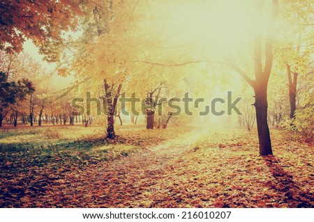 colorful autumn landscape with yellow trees and sun, natural background, instagram effect - stock photo