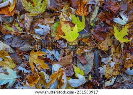 Colorful autumn leafs on the ground - stock photo