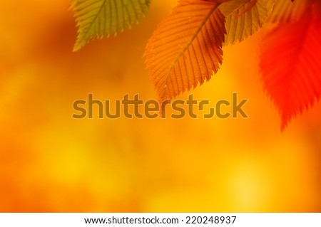 Colorful Autumn Leaves. Autumn Background - stock photo