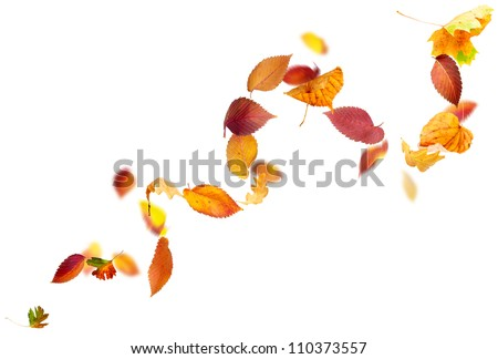 Colorful autumn leaves falling and spinning in the wind on white - stock photo