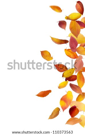 Colorful autumn leaves falling and spinning isolated on white - stock photo