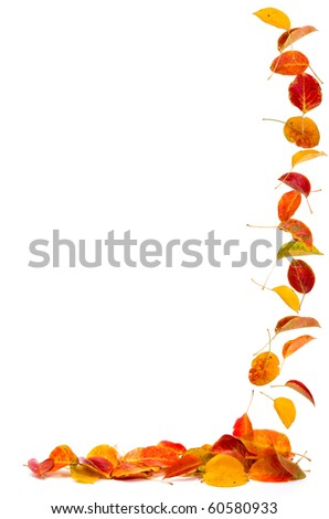 Colorful autumn leaves falling to the ground, isolated on white. - stock photo