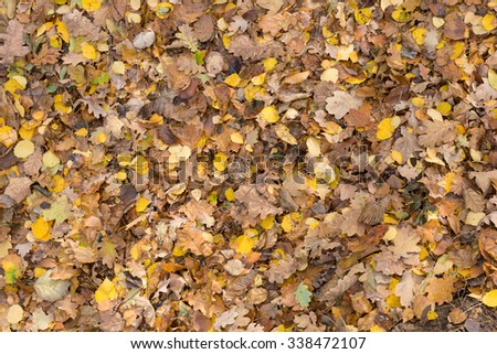 Colorful autumn leaves lying on a ground in forest - stock photo