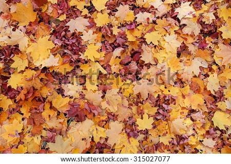 Colorful autumn leaves. natural background - stock photo
