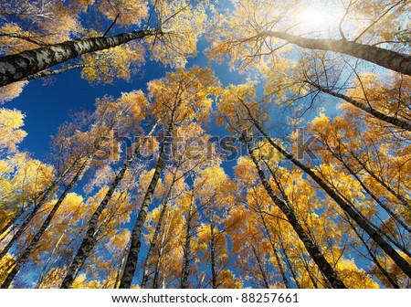 Colorful autumn leaves on a trees in forest - stock photo