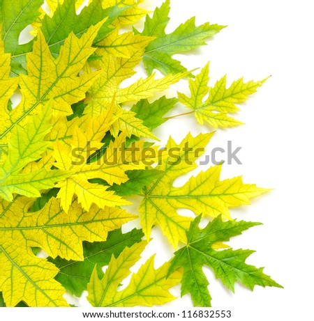 Colorful autumn leaves on white background - stock photo