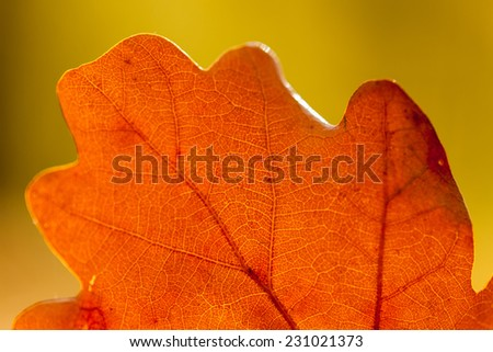 Colorful autumn leaves texture background - stock photo