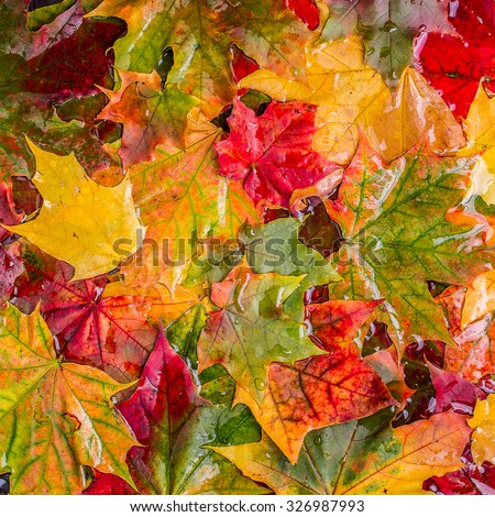 Colorful autumn leaves, top view. - stock photo