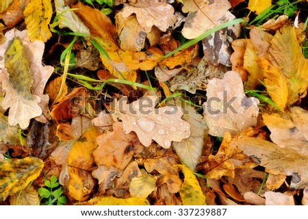 Colorful autumn leaves with drops of dew - stock photo