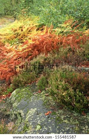 Colorful autumn mountains garden. Ferns and heather around the rocks on the mountain slopes. Autumn colors palette - stock photo