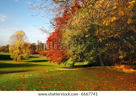 Colorful autumn scene - stock photo