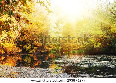 Colorful autumn sunny bright landscape  - stock photo