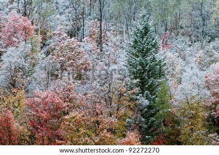 Colorful autumn trees with snow - stock photo