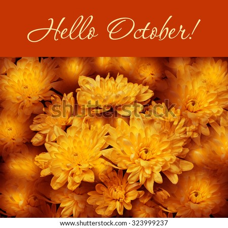 "Colorful autumn wallpaper, background. Floral chrysanthemums fantasy, double exposure artistic effect, soft blur style. ""Hello October!"" greeting card. - stock photo"