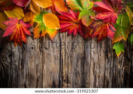 Colorful autumnal background with leaves - stock photo