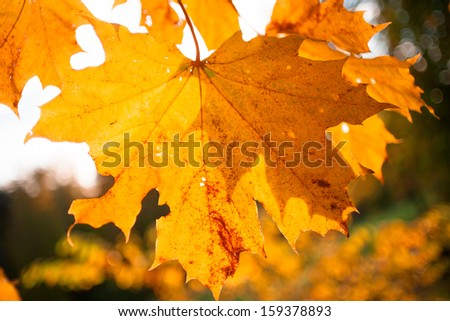Colorful autumnal background with maple leaves - stock photo