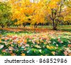 colorful autumnal forest - stock photo