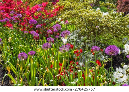 Colorful azalea garden with purple allium flowers as well. - stock photo