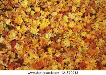 Colorful backround image of fallen autumn leaves perfect for seasonal use - stock photo