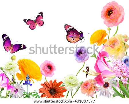 Colorful beautiful flowers and butterflies .Nature abstract background. Isolated on white  - stock photo