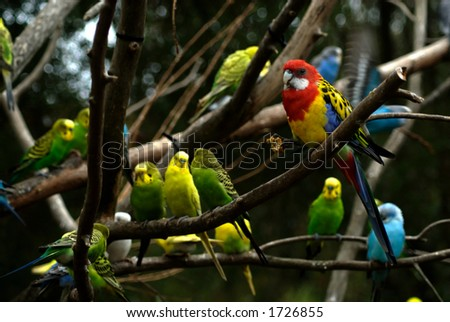 colorful birds in a crowded tree - stock photo