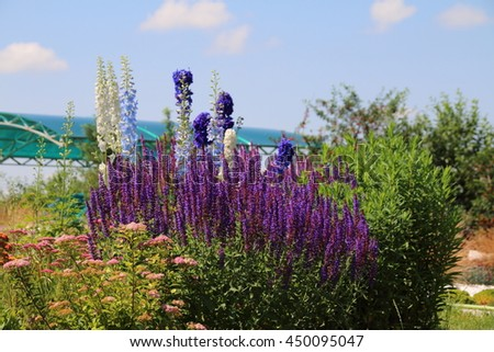 Colorful blooming cultivar flowers in the summer flowerbed - stock photo