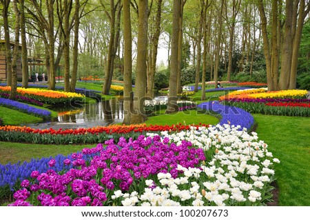 Colorful blooming tulips in Keukenhof park in Holland - stock photo
