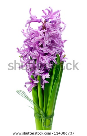 colorful bouquet from hyacinth arrangement centerpiece isolated on white background - stock photo