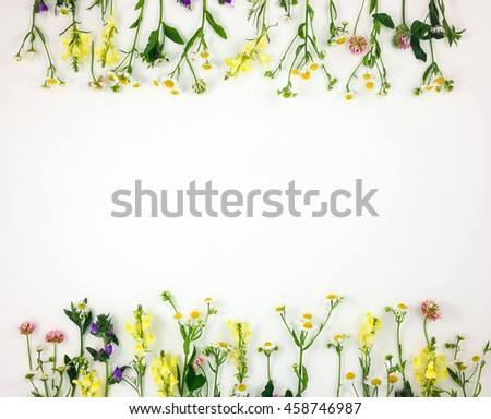 Colorful bright frame made of meadow flowers on white background. Flay lay, top view with copy space - stock photo