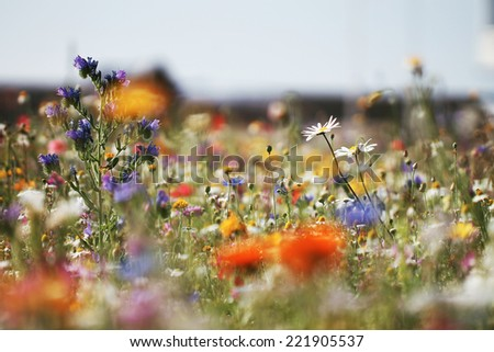 colorful bright meadow flowers in field - stock photo