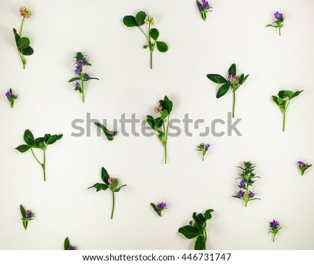 Colorful bright pattern of wild meadow flowers on white background. Flay lay, top view - stock photo