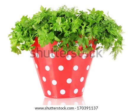 Colorful bucket with parsley and dill isolated on white   - stock photo