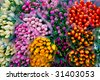 Colorful bunches of tulips in a flower market in the streets of Amsterdam. - stock photo