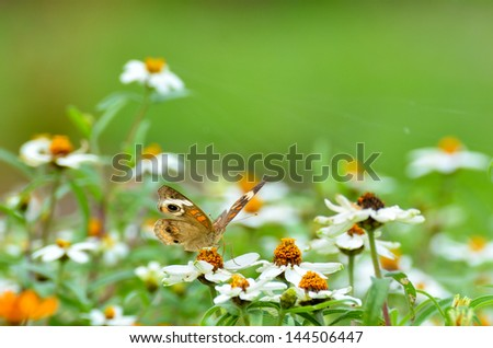 Colorful butterfly on chamomile daisies - stock photo