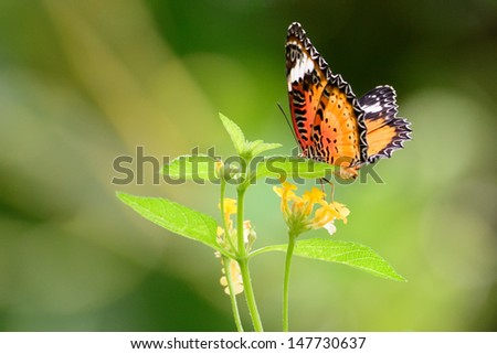 Colorful butterfly on the flower - stock photo