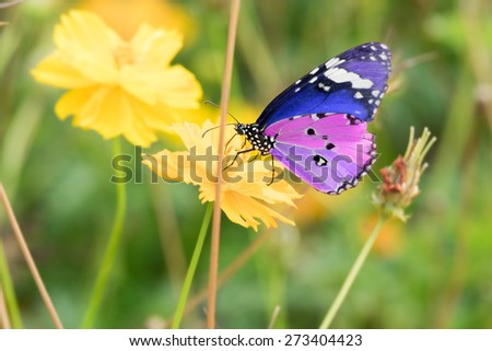 colorful butterfly on the yellow flower - stock photo