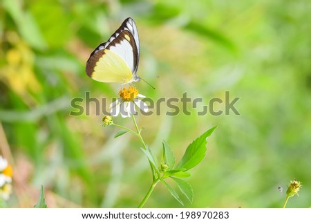 Colorful butterfly on white flowers  - stock photo