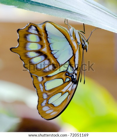 Colorful butterfly portrait... - stock photo