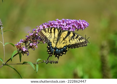 Colorful Butterfly resting on a flower. - stock photo