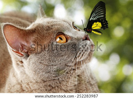 Colorful butterfly sitting on cat's nose on green natural background - stock photo