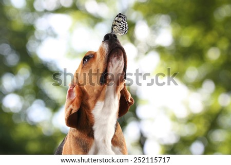 Colorful butterfly sitting on dog's nose on bright green background - stock photo