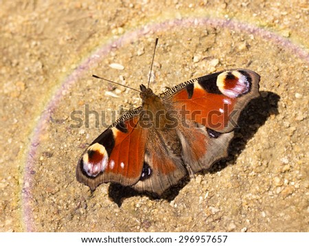 colorful butterfly sitting on the ground - stock photo